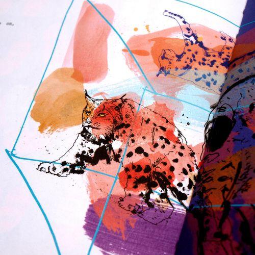 Lynx illustration on paper