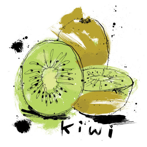 Kiwi fruit watercolor drawing