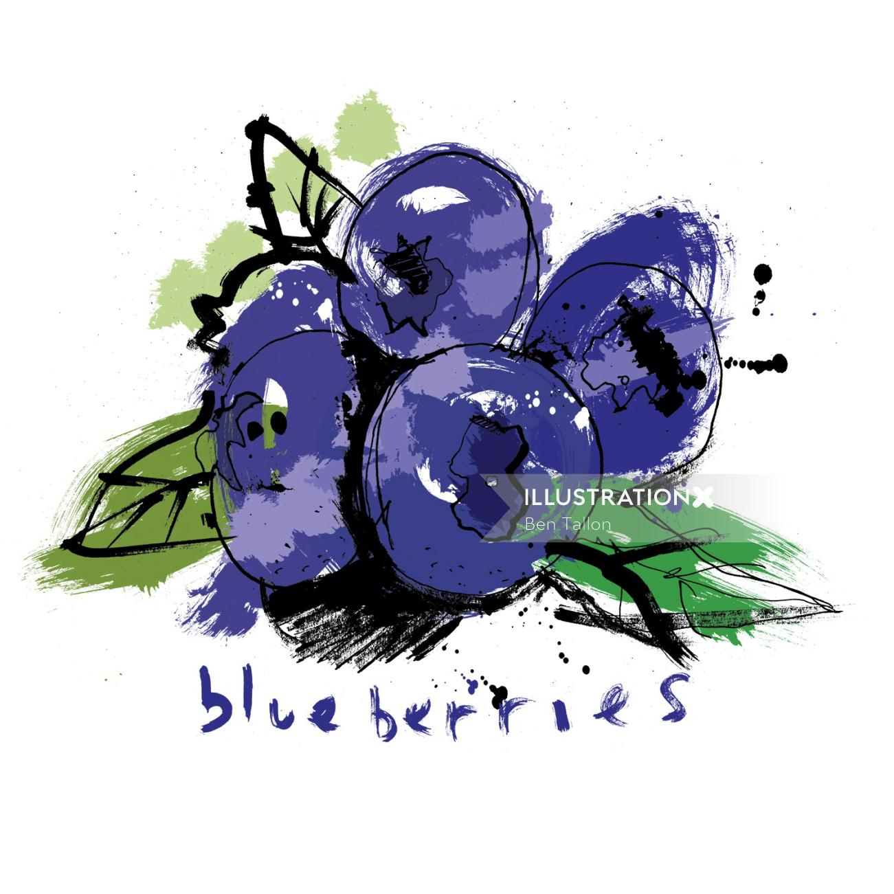 Watercolor drawing of Blueberries