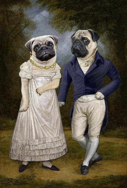 Animal Pug dog couple