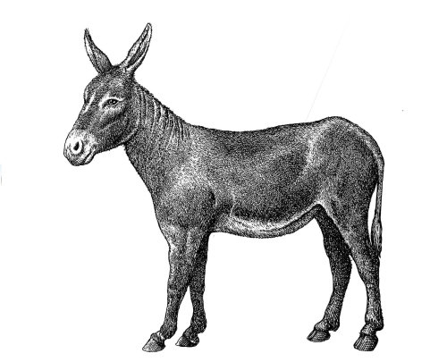 Black and white illustration of donkey