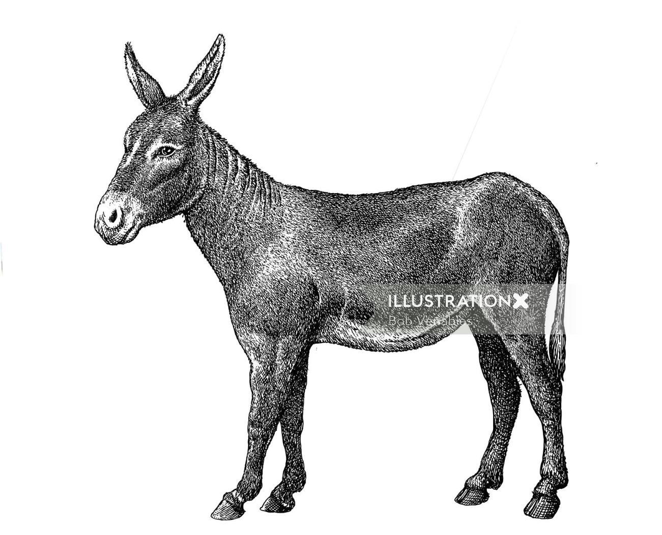 Black and white illustration of donkey