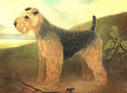 Welsh Terrier Dog painting