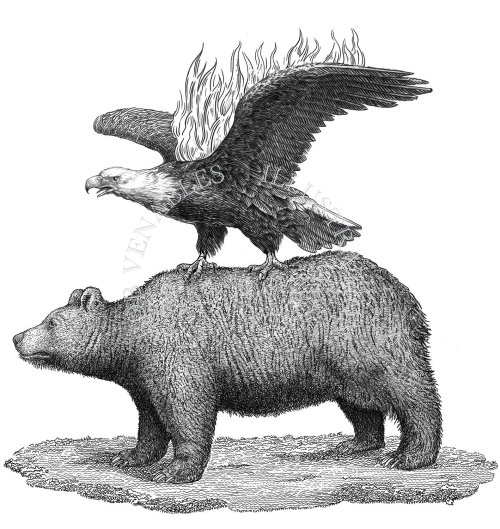 Eagle & bear black and white illustration