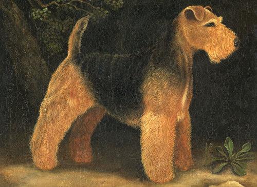 威尔士梗犬绘画