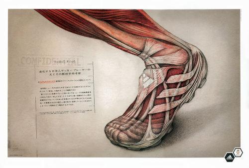 Human leg medical illustration