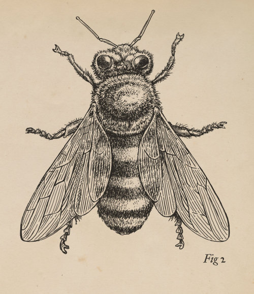Line art of Insect Honey Bee