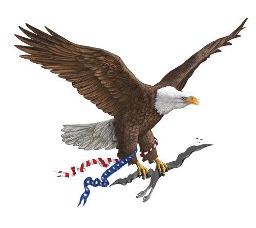 Flying Bald Eagle bird illustration