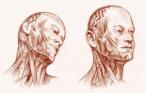 Human Head figure digital art