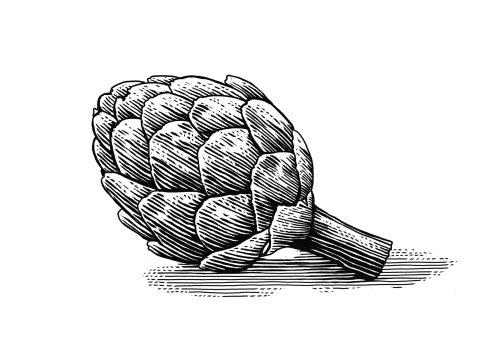 Line drawing of Artichoke plant