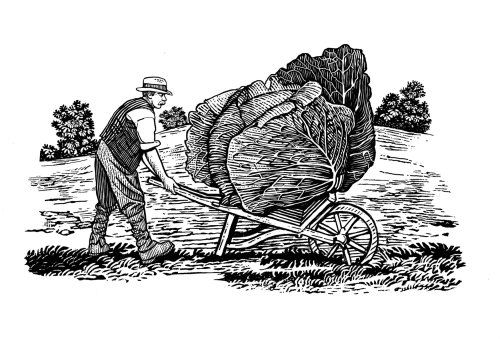 Farmer holding Cabbage wood engraving art