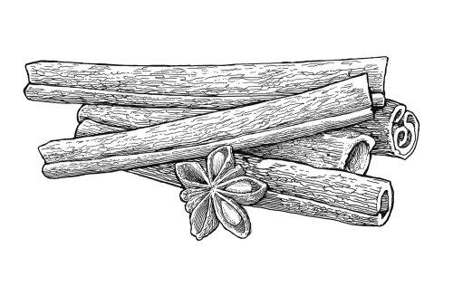 Black and white sketch of Cinnamon Sticks