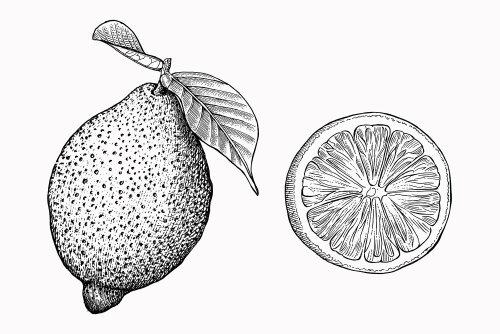 Black and white illustration of Pear & Orange fruit