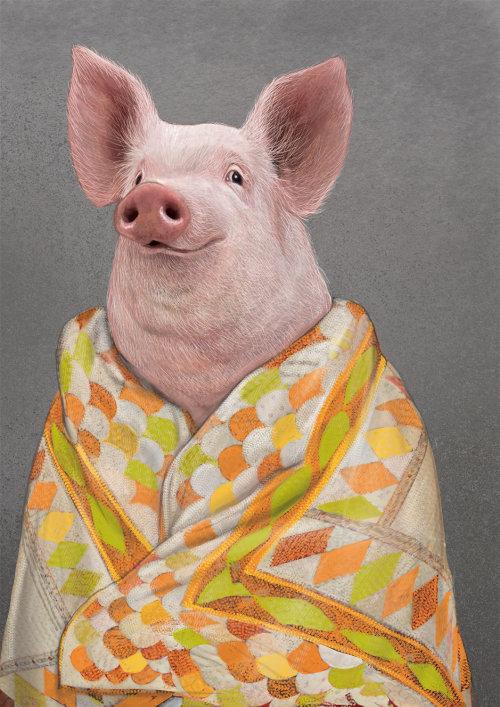 Animal Pig portrait