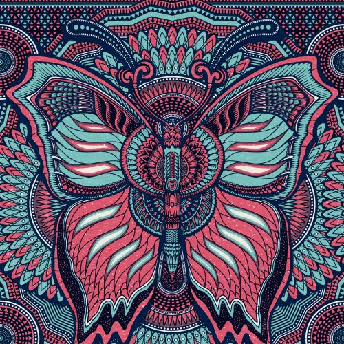 Illustration of a butterfly for vlisco