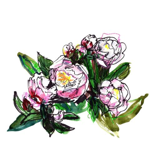 Watercolour painting of peonies