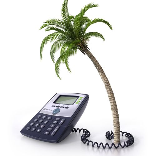 Palm tree and telephone illustration
