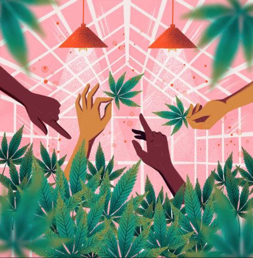Acuarela de plantas de cannabis.