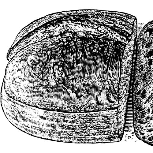Bread illustration by Caroline Church