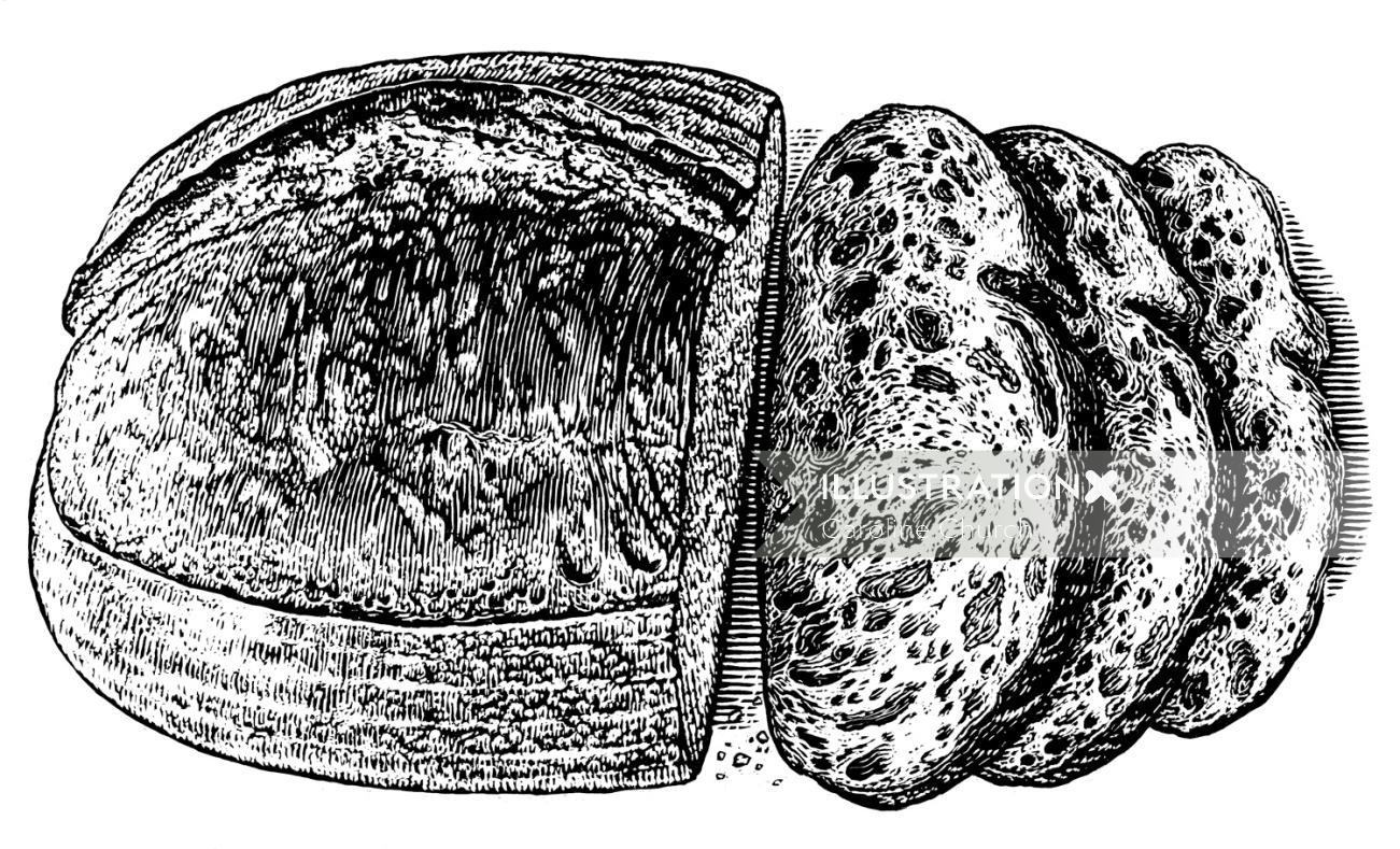 Bread illustration by Caroline Church