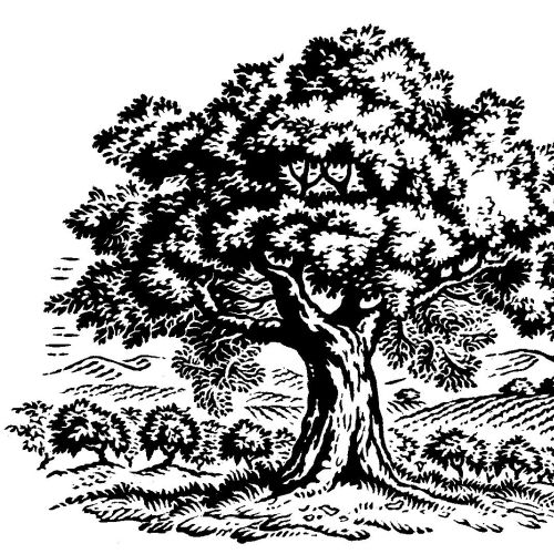 black and white woodcut old tree art