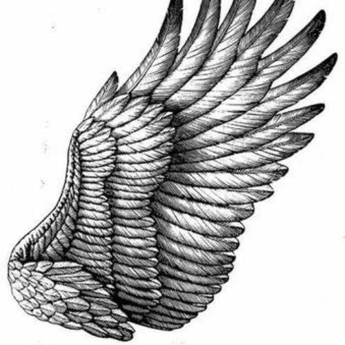 Black & White Feather illustration