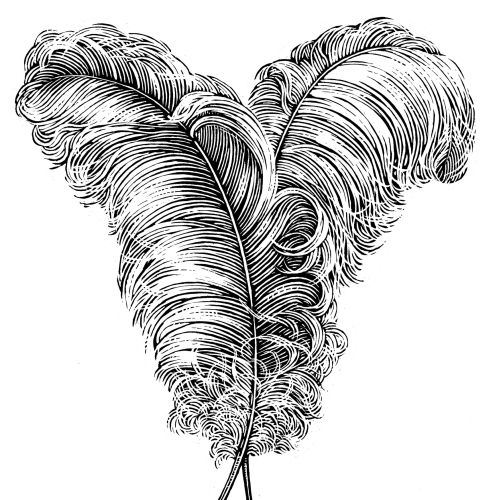 Black & White feathers