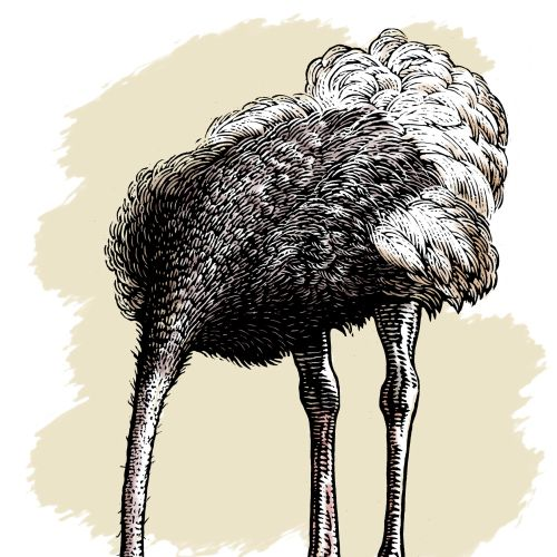 Emu Birds animal illustration