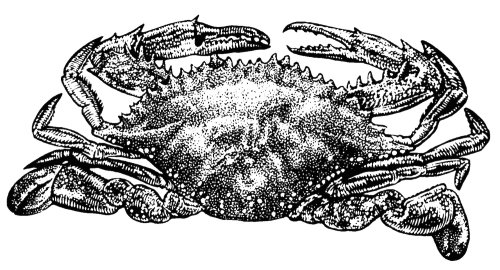 Black and white art of crab