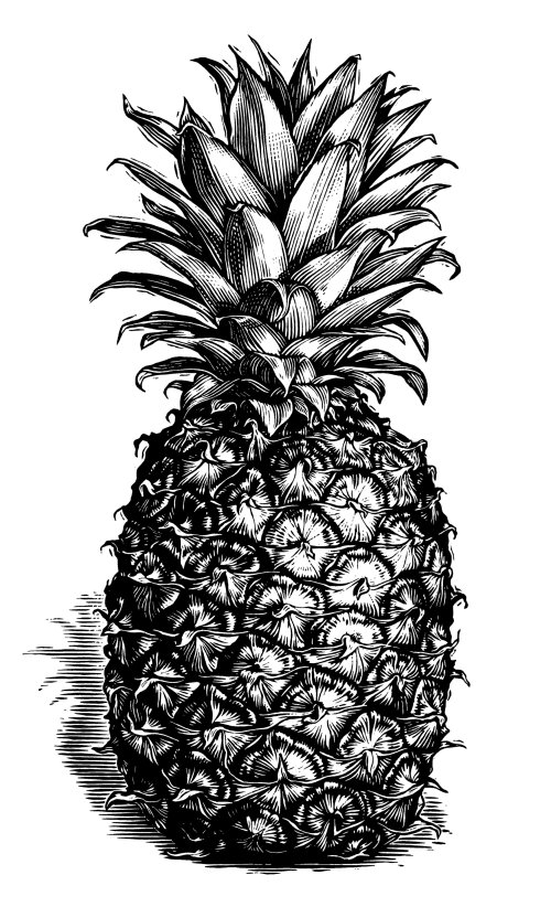 Pineapple black and white illustration
