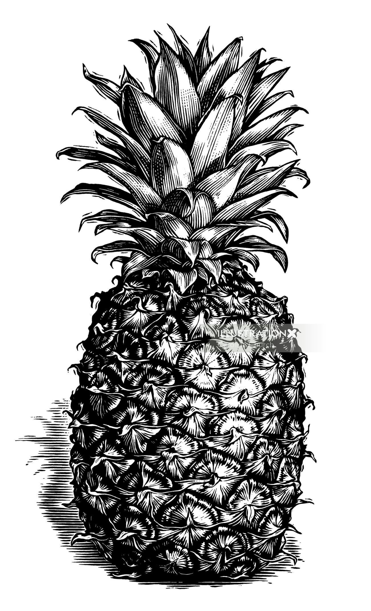 Pineapple black and white illustration