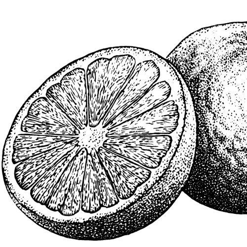 Black & White Lemon Slice