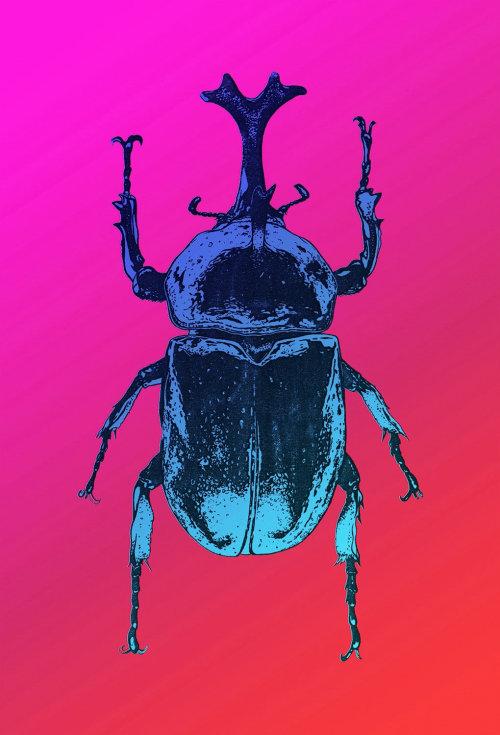 Animal art of bug