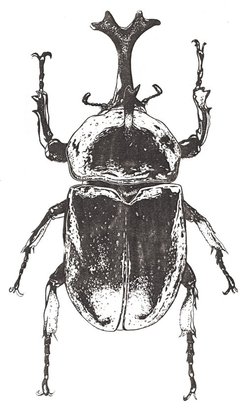 Black & white drawing of insects
