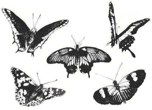 Animals butterflies art