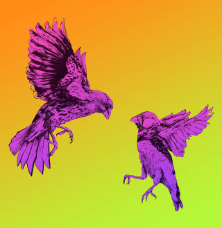 Flying birds graphic design by Chris Ede