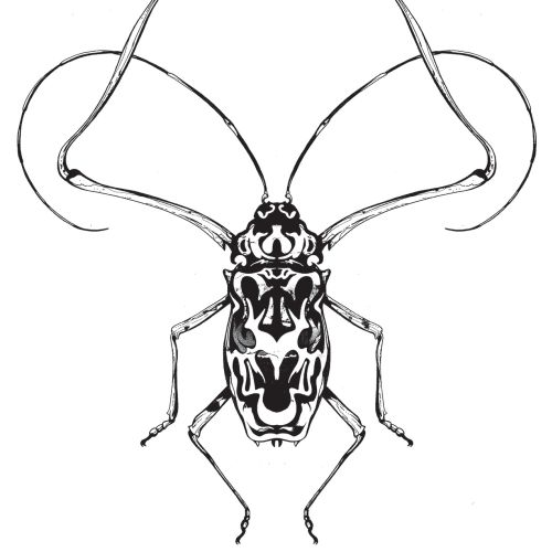 bug engraving illustration