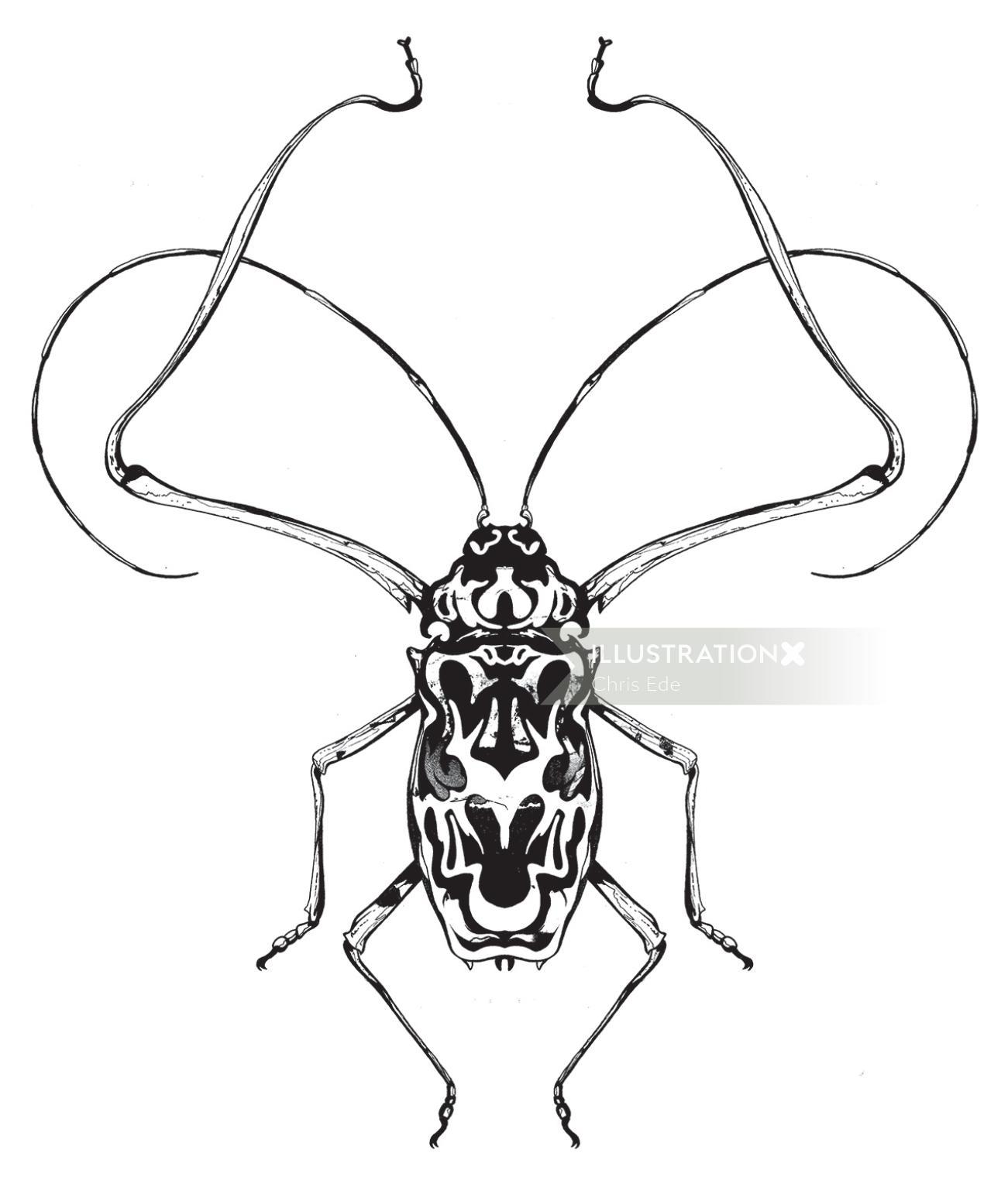 bug engraving illustration