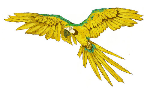Animals parrot in yellow color