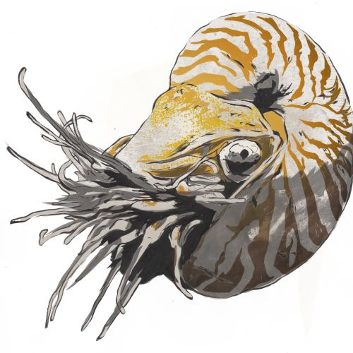 Illustration of sea animal