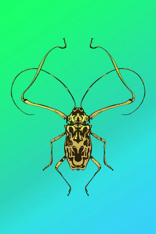 甲虫的线条画