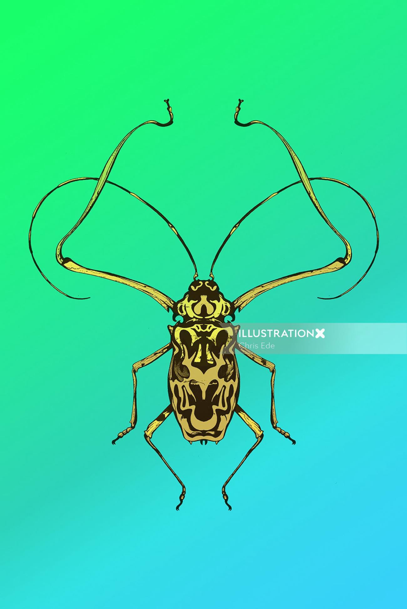 line drawing of beetle