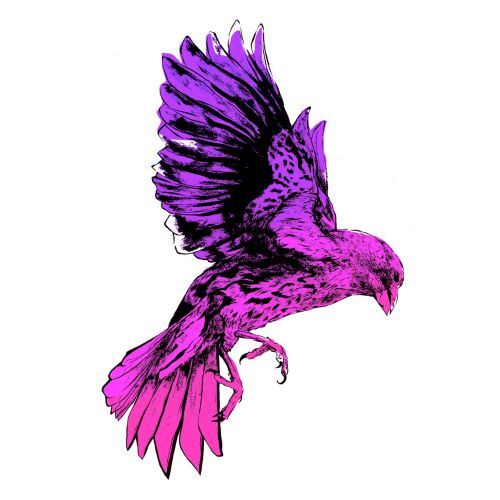 flying pink bird illustration