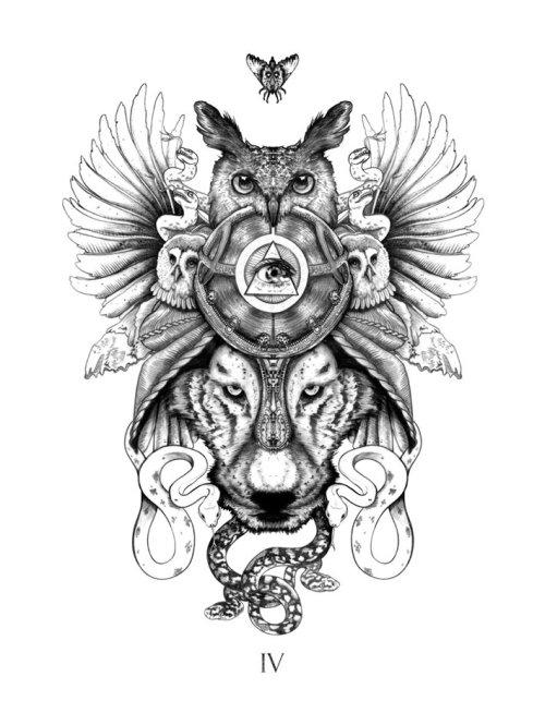 猫头鹰和蝴蝶的社论插图