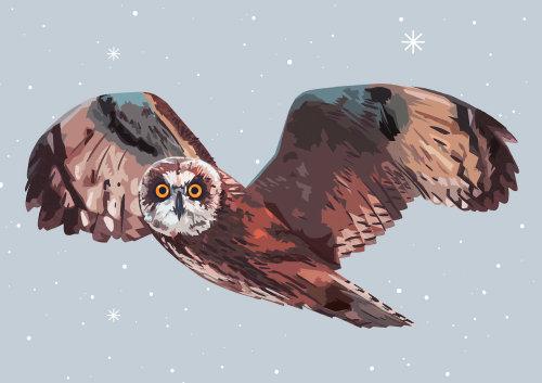 短耳猫头鹰的形象