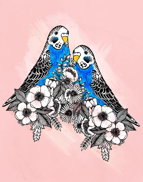 Budgie birds flowers nature