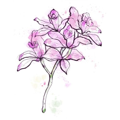 Irises flowers illustration