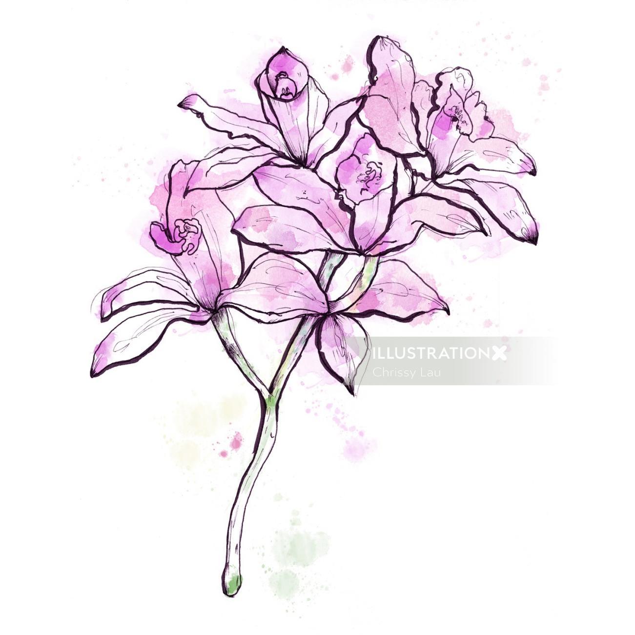 Irises flowers illustration