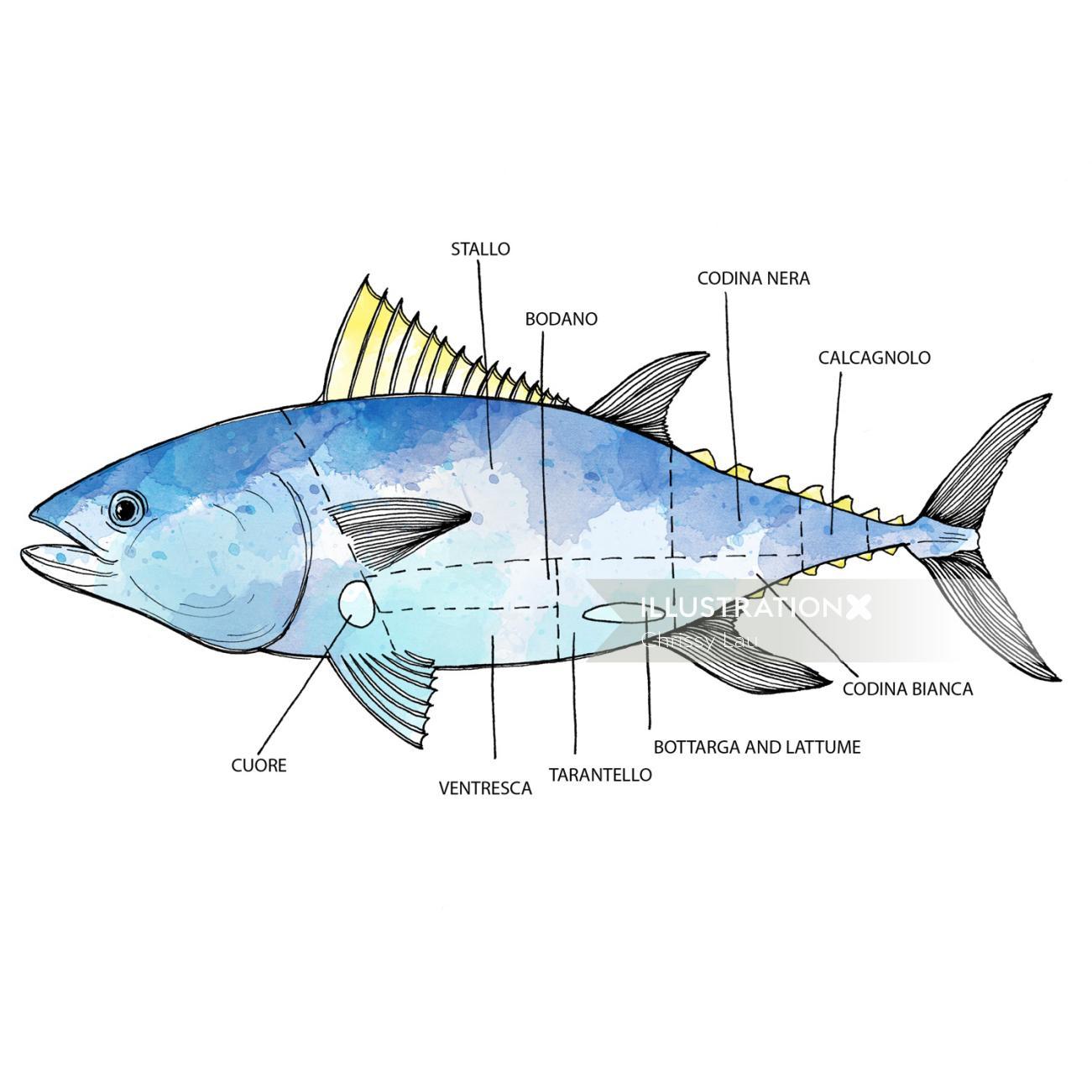 Conceptual art of fish body parts explain