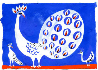 White peacock illustration by Christopher Corr